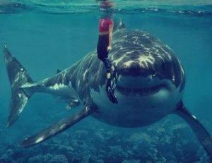 enorme tiburón blanco