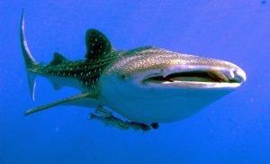 nombres y tipos de tiburones