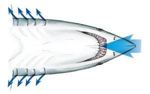 repiracion del tiburón