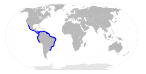 Sphyrna media distribución