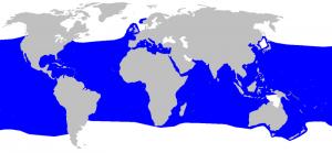 mapa de distribución del tiburón marrajo