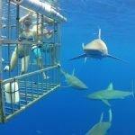 imagenes de tiburon blanco animado, imagenes de tiburon blanco asesino, imagenes de tiburon blanco para colorear