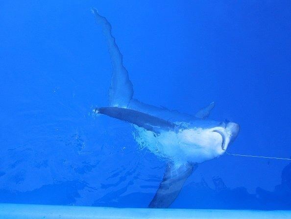 fotos del zorro marino