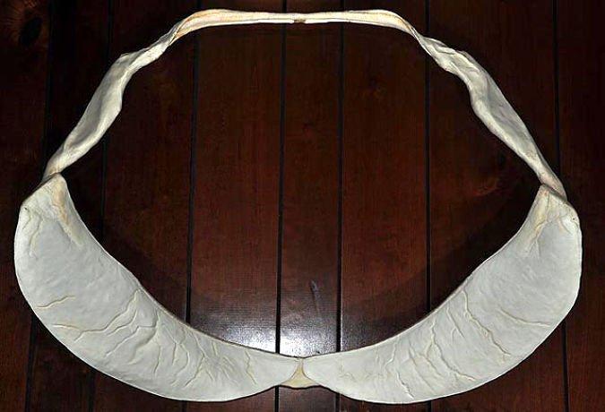 tiburon ballena mandíbulas