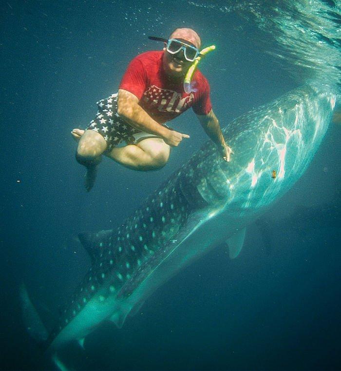 tiburon ballena y buzo