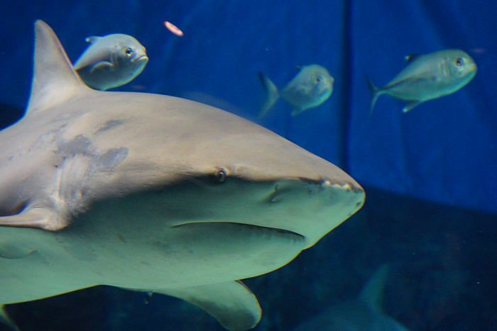 tiburón toro cancun