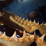 filas dientes tiburon blanco