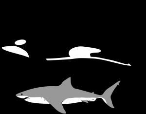 gran tiburón blanco vs orcas