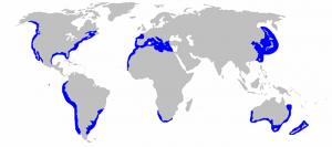 tiburón blanco habiat, tiburon blanco habitat, tiburon blanco donde habita, tiburon blanco su habitat, tiburon blanco caracteristicas habitat, tiburon blanco habitat natural