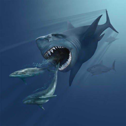 tiburon megalodon