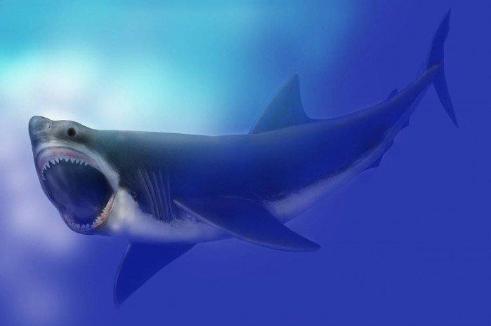 tiburon megalon imágenes