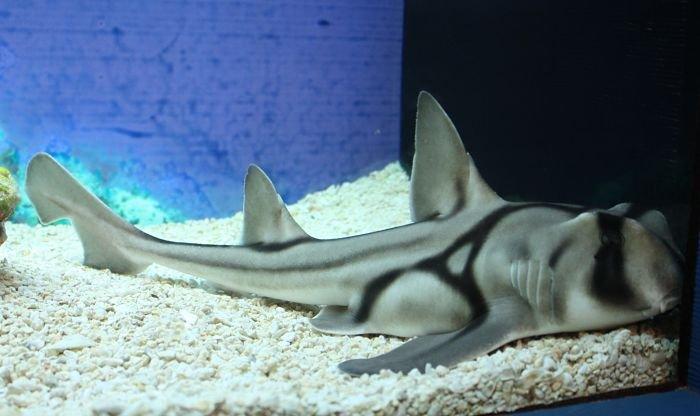 tiburon port jackson imagenes
