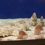 Tiburon alfombra fotos