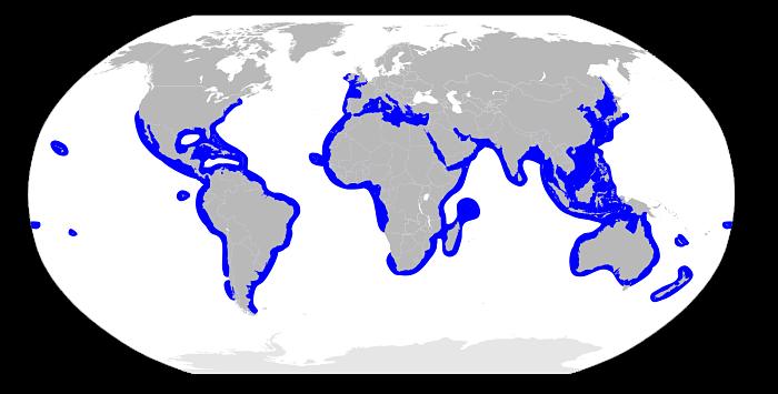 dónde vive y qué come un tiburón