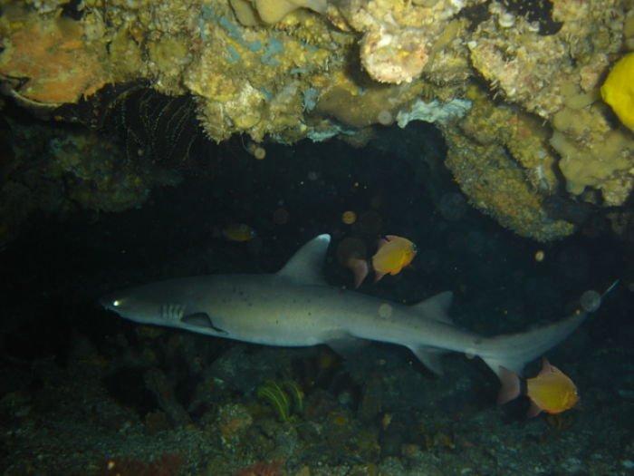 donde y como duermen los tiburoneS