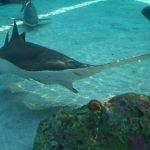 fotos tiburon sierra