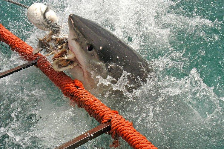 Mordida de tiburón