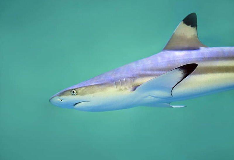 ¿Qué es un tiburón ?