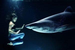 fotos tiburon blanco mas grande del mundo encontrado, fotos tiburon blanco para imprimir, tiburon blanco fotos gratis, tiburon blanco fotos hd, tiburon blanco fotos reales, tiburon blanco imagen hd, tiburon blanco mejores fotos