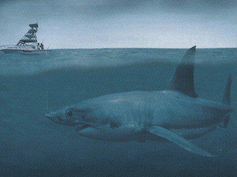 por qué se extinguió el megalodon, por que se extinguio el tiburon megalodon, porque se extinguieron el megalodon, porque se extinguieron los megalodon, porque se extinguieron los tiburones megalodon, se extinguio el megalodon, xq se extinguio el megalodon